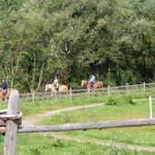 1502267600D-0221-pferde-reiter-bei-st-leonhard-passeier.jpg