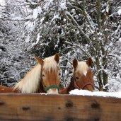 C-2571-pferde-im-winter-schnee.jpg