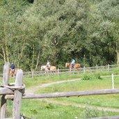 D-0221-pferde-reiter-bei-st-leonhard-passeier.jpg