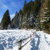 forstweg laugenalm winter