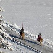 D-2776-winter-haflinger-pferde-reiten-ridnauntal.jpg