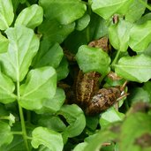 D-3942-kleiner-frosch-gruen-natur-umwelt.jpg