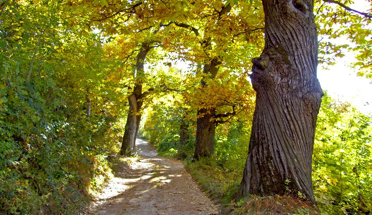 Walking along the Chestnut trail, Foto: AT, © Peer