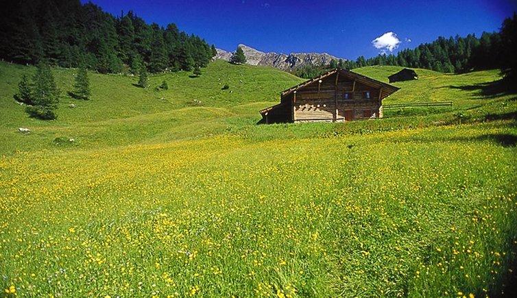 Free Dating Tyrol
