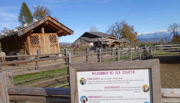 Tierwelt Rainguthof in Gfrill, Foto: MS, © Peer